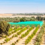 Policy Options for Reducing Water for Agriculture in Abu Dhabi
